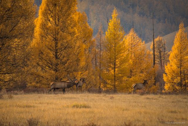 Ан гөрөө хобби юу мэргэжил үү? (фото 2)