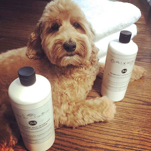 Shout out to my friend Tammy and her company @theprobioticline for creating these awesome Probiotic Laundry Liquid and Dog Wash soaps   both Teddy and my laundry have never been softer     ! Great for sensitive skin, eco-friendly, non-toxic, vegan, cruelty-free and made in Australia    just like me  . Proud of you, Tammy